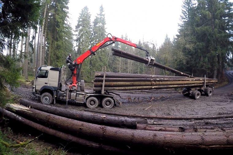 Nowe przepisy dotyczące transportu drewna