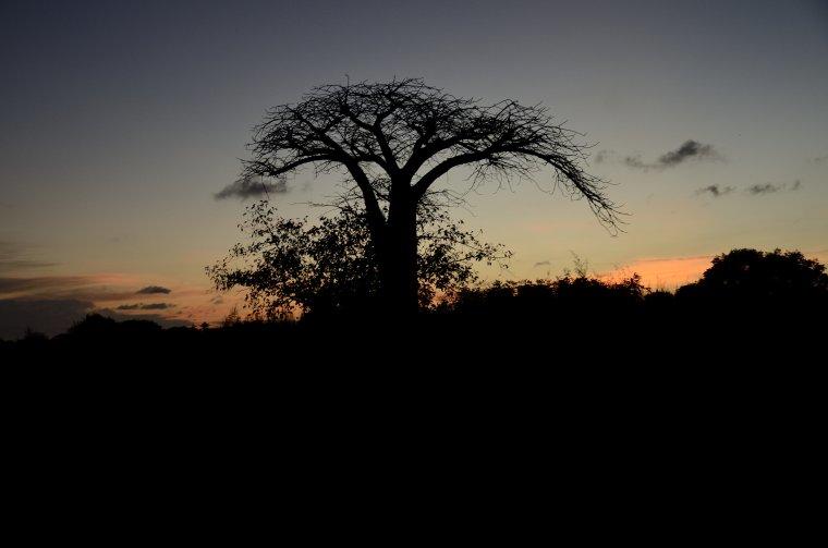 Zachód słońca z baobabem
