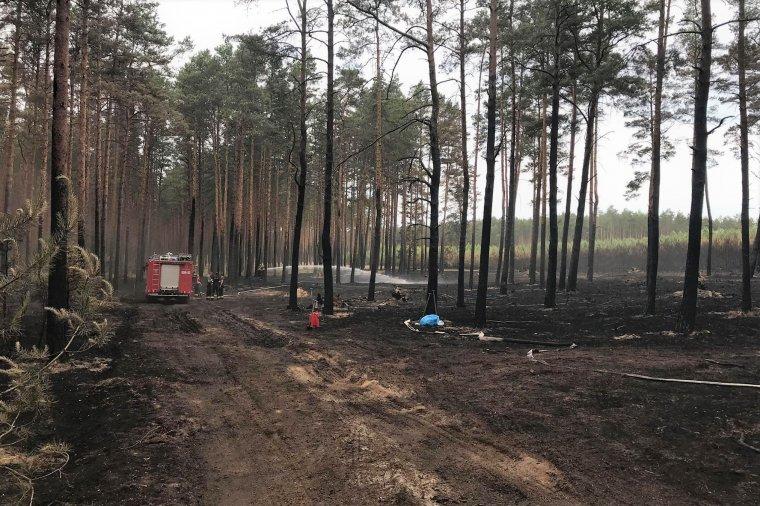 Kolejny pożar w lasach dotkniętych klęską wiatrołomów