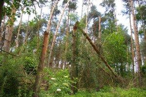 Wiatrołomy zalegają w lasach