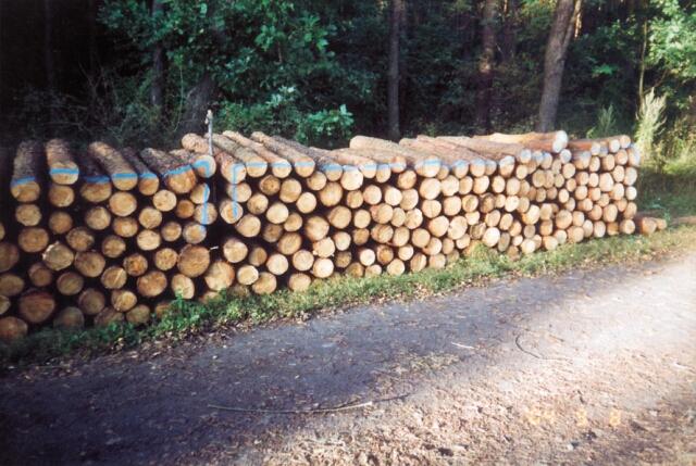 <center>foto: Nadleśnictwo Drewnica </center>