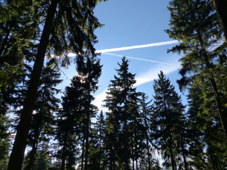 Lasy Państwowe: Plan na 2007r. - 30,5 mln m3 drewna
