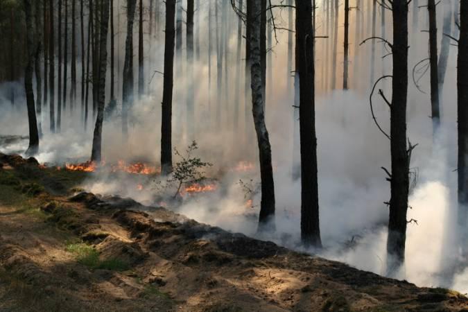 W niedzielę w okolicach Piły spłonęło aż 20 ha lasu. Był to największy pożar w tym roku.