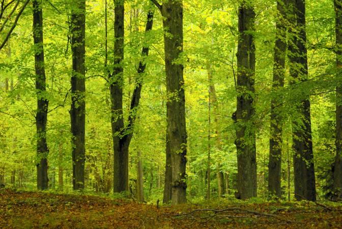 Lasy są nie tylko piękne, mają też realną i wielką wartość