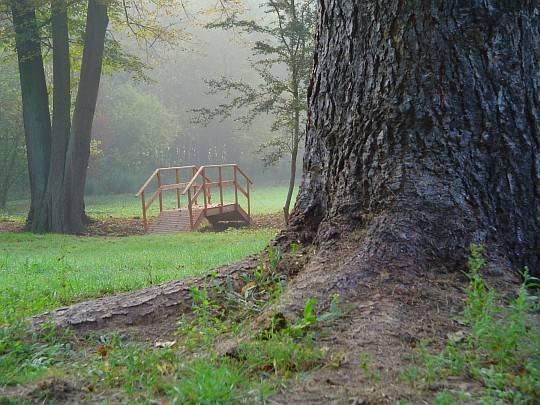 Niektóre drzewa mają ponad 100 lat