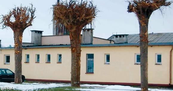 Drzewa korzeniami do góry przed zakładem w Barnowie.