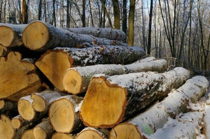 Ceny drewna z LP są zbyt wysokie dla polskiego przemysłu