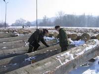 Wycena drewna