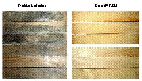 Próbki kontrolne tarcicy porażonej sinizną i zabezpieczonej środkiem Korasit® BSM