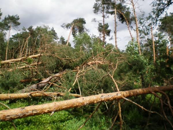 Wielkopolskie lasy ucierpiały od wiatru