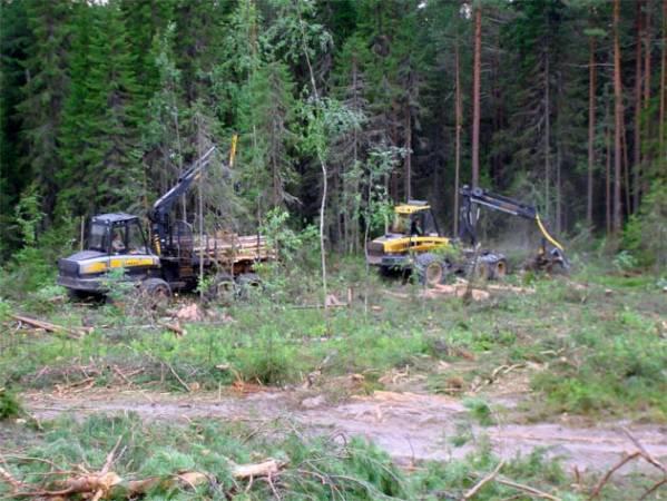 Centrozap rozpoczął wycinkę lasów pod budowę zakładu przerobu drewna.