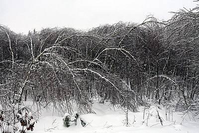 Śnieg i lód przyczyną strat w świętokrzyskich lasach