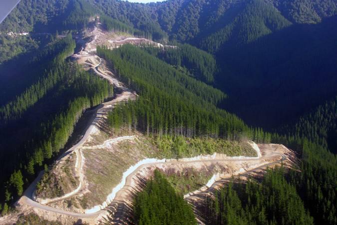 Chiny są głównym odbiorcą drewna z nowozelandzkich plantacji. Na zdjęciu trakty wywozowe z plantacji położonej w regionie Marlborough (Nowa Zelandia)