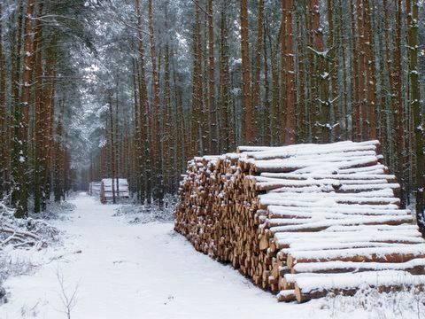 Unijna polityka sprawiła, że pełnowartościowe drewno trafia do pieca zamiast zakładów przetwórstwa