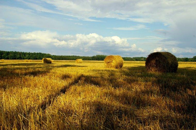 Widok Energia ma ambicje stać się liderem rynku w zakresie przetwarzania biomasy rolniczej na paliwo energetyczne.