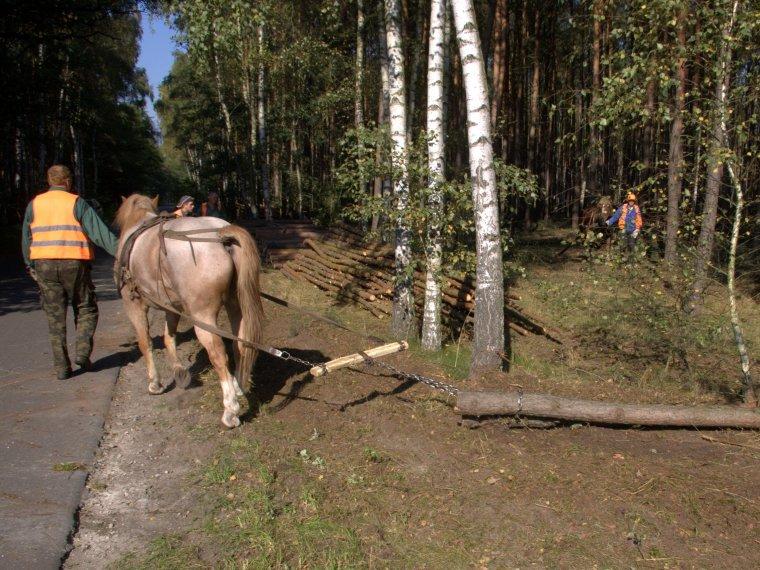 W ciągu dziesięciu lat liczba zakładów usług leśnych spadła o ok. 60%