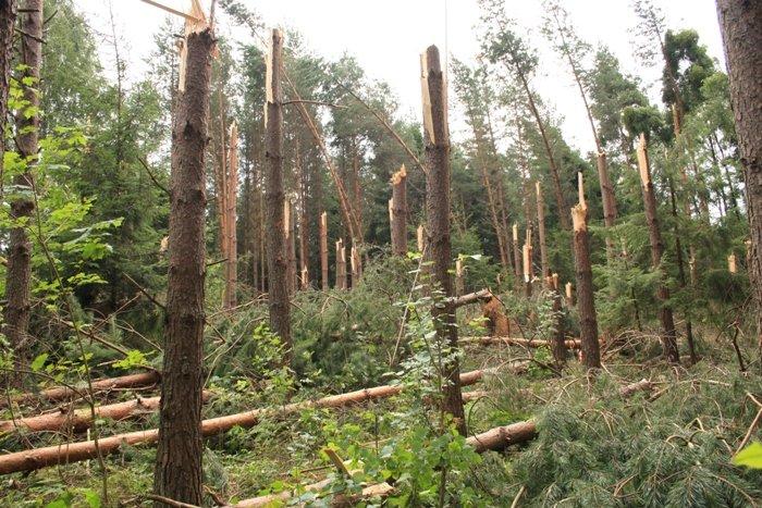 Wiatrołomy  w lasach Warmii i Mazur