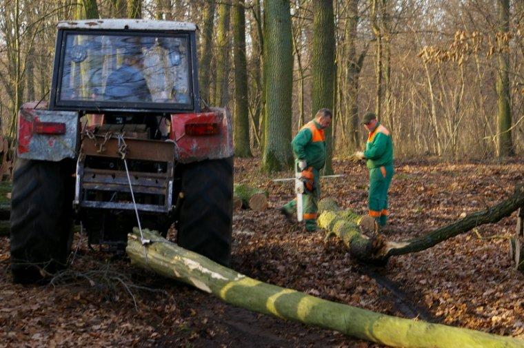 W 1993 Lasy Państwowe rozpoczęły prywatyzację prac leśnych, w wyniku której większość robotników fizycznych zmuszona zostało do podjęcia pracy, w często jednoosobowych Zakładach Usług Leśnych