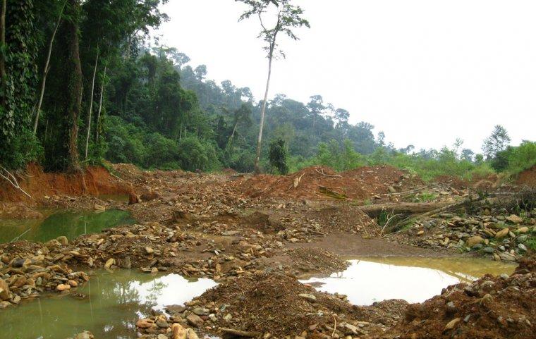 Las zniszczony podczas nielegalnego wydobycia złota