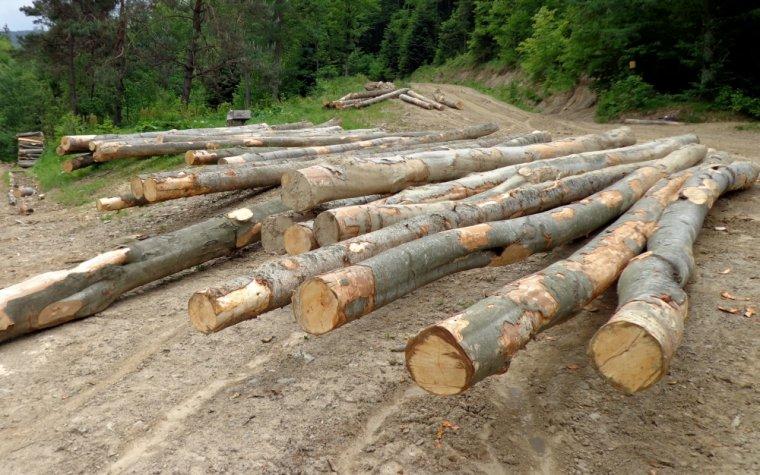 Drewno bukowe