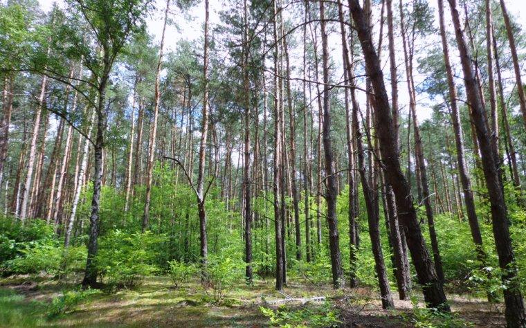 17,6% lasów w Polsce należy do osób fizycznych