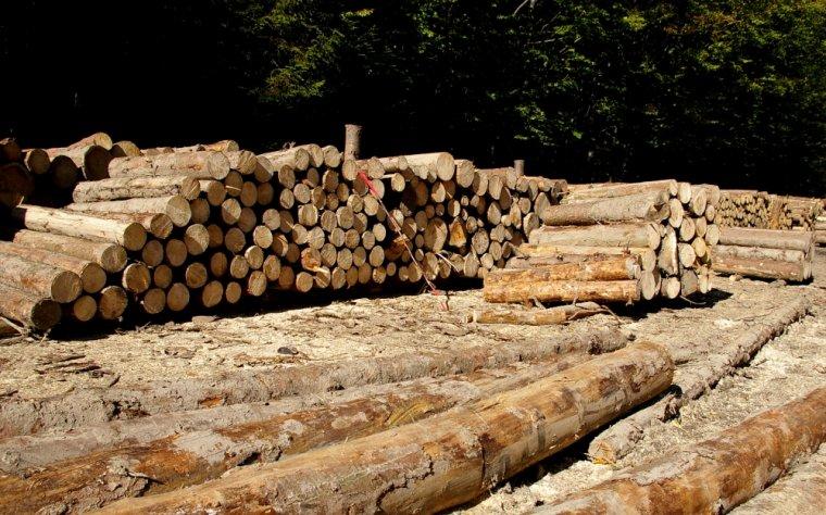 Trzy tygodnie przed planowanym rozpoczęciem sprzedaży drewna na 2013r. wciąż nie wiadomo jakie będą jej zasady