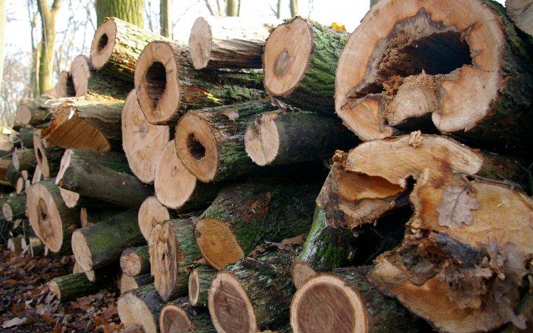 Drewno opałowe może być tańsze