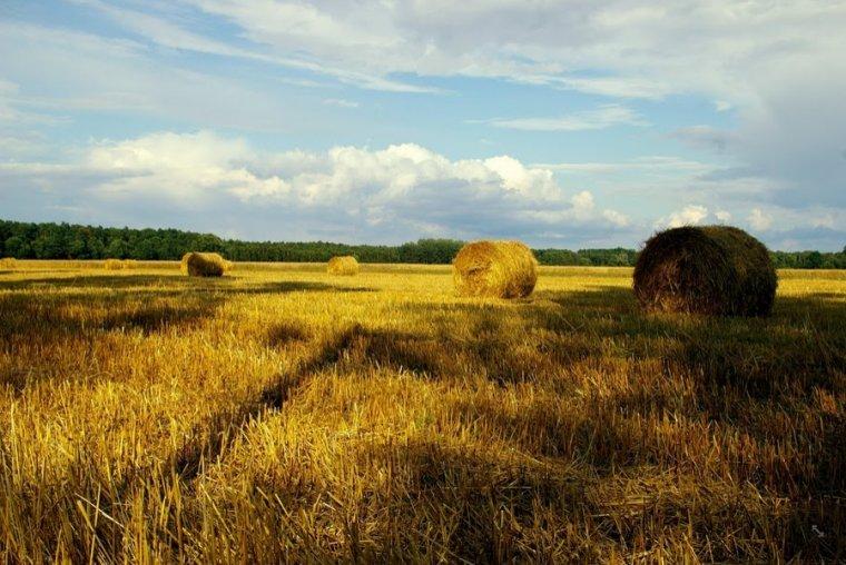 URE sprawdza pochodzenie współspalanej biomasy