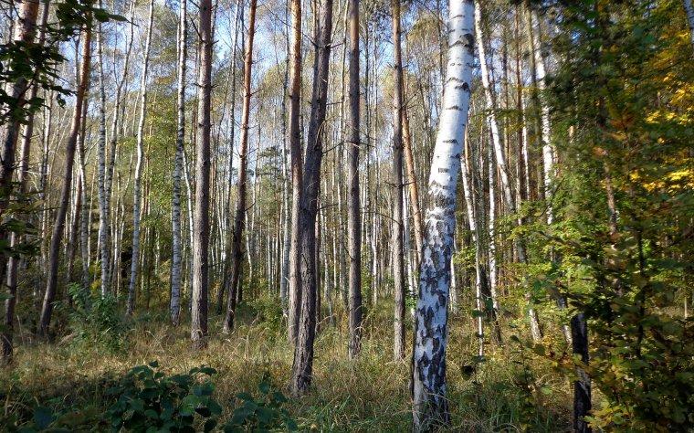 Polskie lasy warte prawie bilion złotych