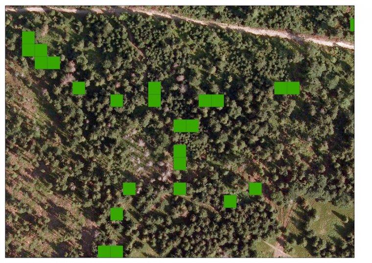 Monitoring satelitarny ułatwia ocenę kondycji zdrowotnej drzewostanów