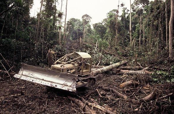 Nielegalny wyrąb prowadzi do spustoszeń w lasach Ameryki Południowej
