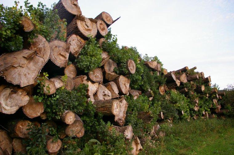 Pozyskiwane przez samorządy drewno marnuje się lub wydawane jest za bezcen