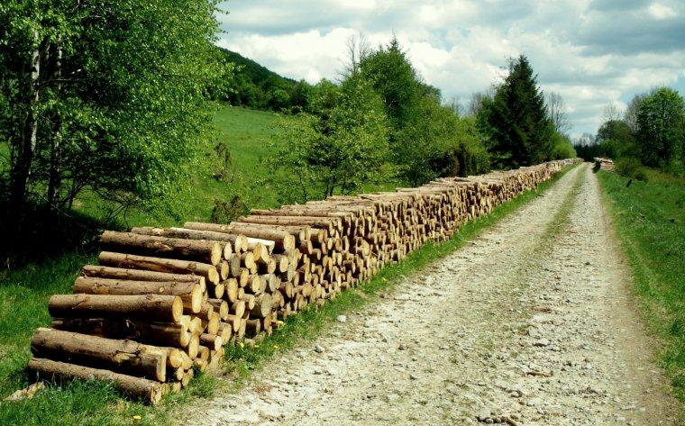 Lasy Państwowe opublikowały zasady sprzedaży drewna na 2014r.