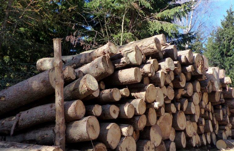 Surowiec drzewny: Więcej znaczy mniej