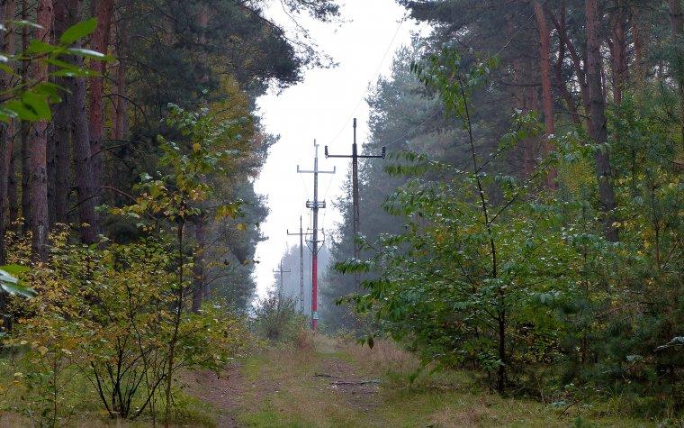Kwestia służebności leśnych gruntów pod liniami energetycznymi od wielu lat była przedmiotem negocjacji pomiędzy LP i PSE