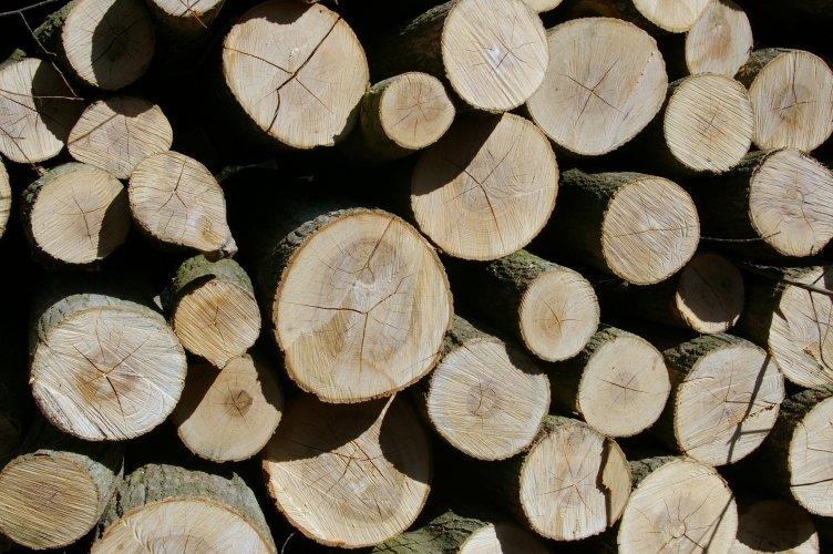 Dotacje dla spalania drewna krytycznym czynnikiem rozwoju rynku drzewnego