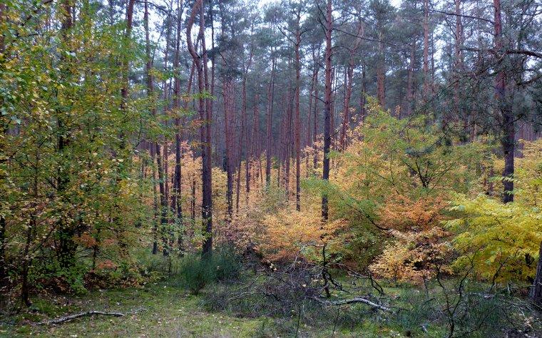 Rząd przyjął projekt zmiany Ustawy o lasach