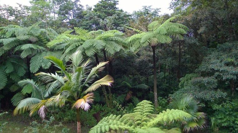 Palmy drzewiaste