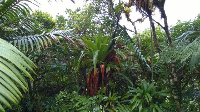 W okolicach jeziora Freshwater Lake występuje największa liczba gatunków endemicznych na Dominice