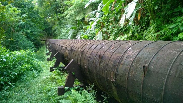 Świeża woda do stocy Dominiki dostarczana jest drewnainym rurociągiem