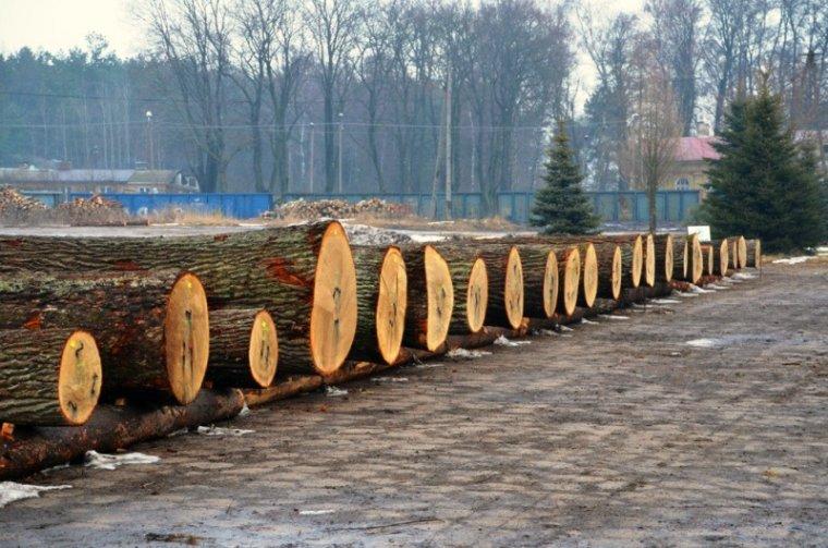 Drewno dębowe na aukcji Drewno Podlasia i Mazur 2014