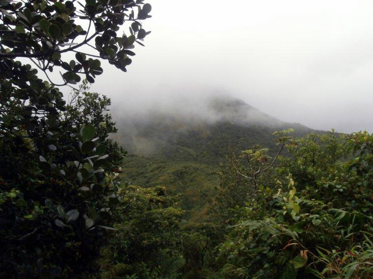 Widok na lasy mgliste, na pierwszym planie endemiczna dla Małych Antyli <i>Clusia magna</i>.