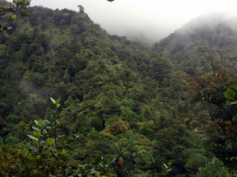 Widok na górski las deszczowy i góry