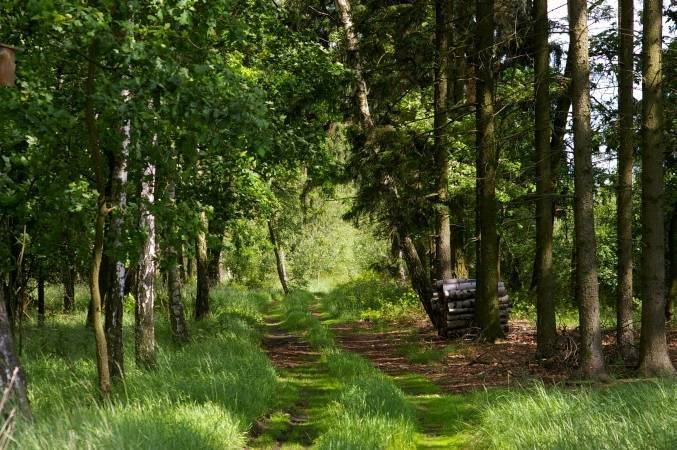 Sejmowa debata o zmianie konstytucji w zakresie zakazu prywatyzacji lasów