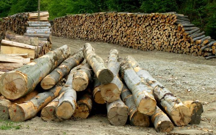 Klienci Lasów za jawością aukcji drewna