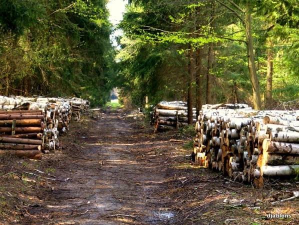 Rośnie białoruski eksport drewna - Polska największym odbiorcą