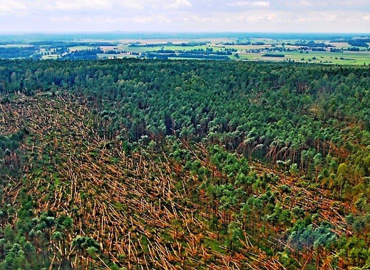 Huragan powalił drzewa w radomskich lasach