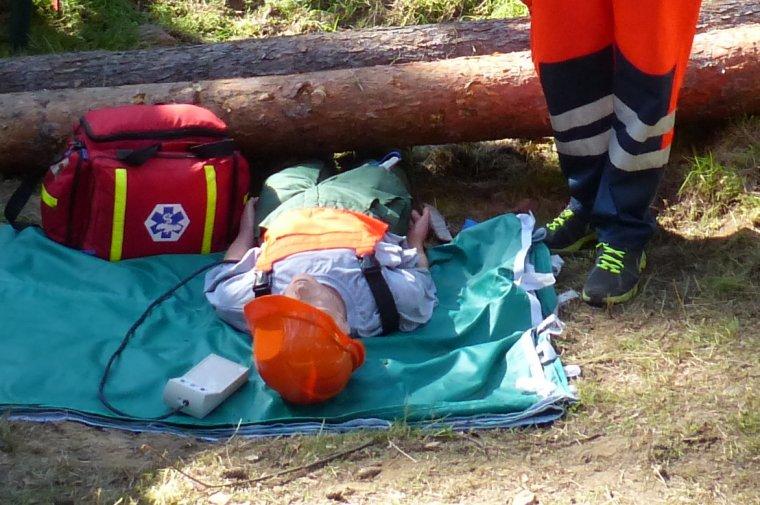 Jedną z przyczyn wypadków podczas prac leśnych są braki w szkolnictwie zawodowym