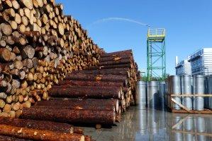 Drewno na placu surowca jest nawilżane, aby zapobiec jego deprecjacji