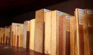 """Ksyloteka to """"biblioteka drewna"""", podobieństwo próbek drewna do książek na regale – bezsprzeczne"""